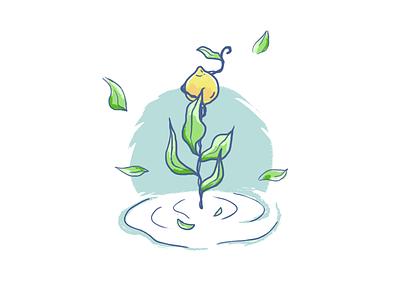 Lemon Tree in water