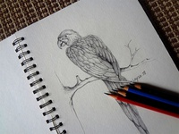 Pencil_Drawing_Bird_Study.