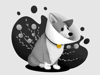 Inktober Day 29: Injured injured cone dogcone corgi dog inktober2019 inktober procreate illustration