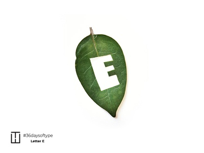 Letter E business abstract lettermark typee 36 days of type 36daysoftype green leaves typography branding letter leaf ecology lettere