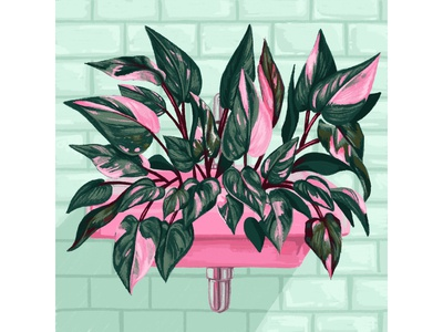 Pink Princess Philodendron Plant