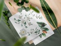 Watercolour floral illustrations