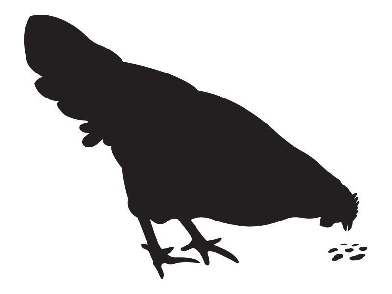 Chicken chicken logo silhouette black identity mark