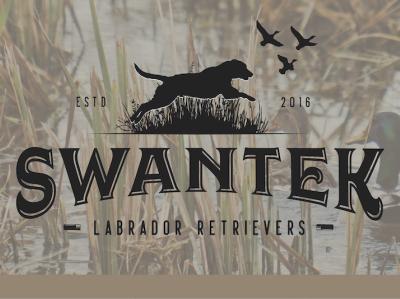 Swantek Labs drawing clothing design illustration typography illustrator type vector brand identity branding logo