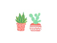Little Cacti
