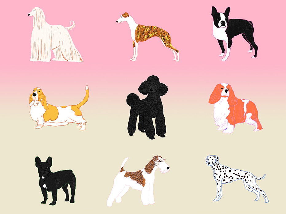 Dogs pets animals milica golubovic design pattern doggy spaniel whippet dalmatian poodle afghan hound boston terrier fox terrier french bulldog basset hound dog illustration dog dogs