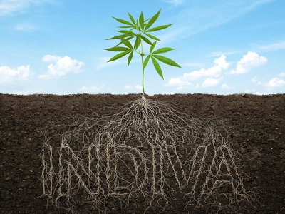 Roots - INDIVA indiva sky roots cannabis art design photo-retouching illustration
