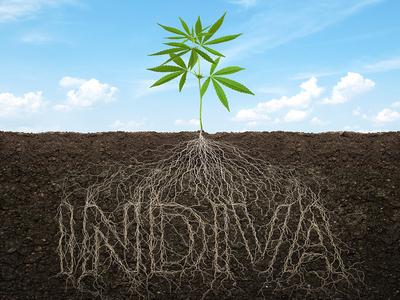Roots - INDIVA