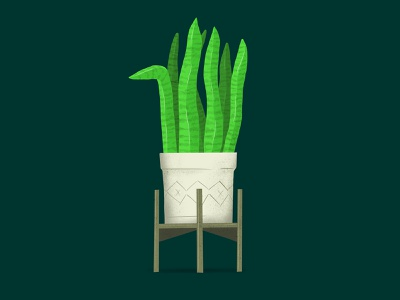 Snake Plant procreate illustration procreate app procreate green plant illustration plants snake plant plant illustration illustrator