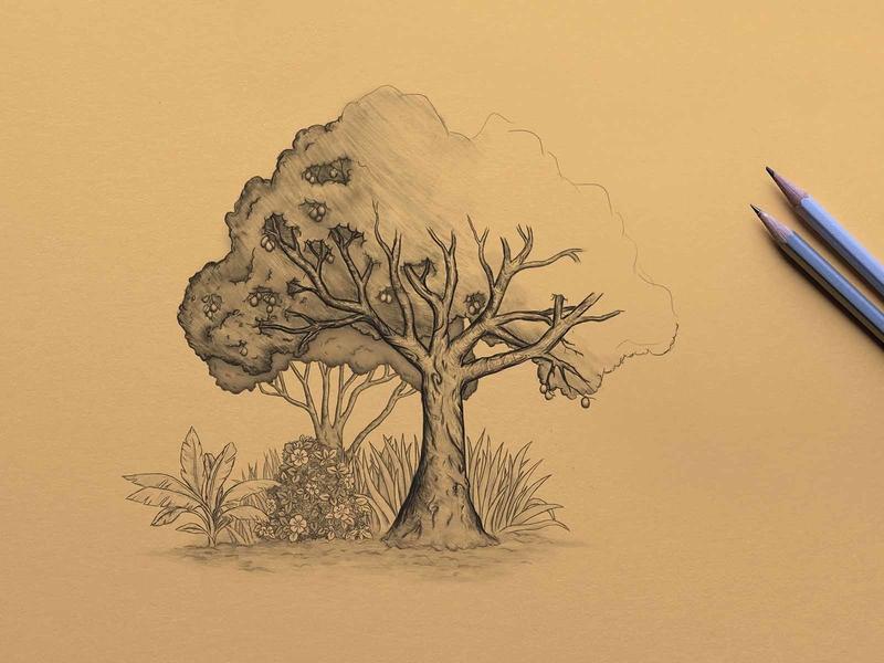Tree Illustration article illustration tree illustration garden tree design web illustration illustration