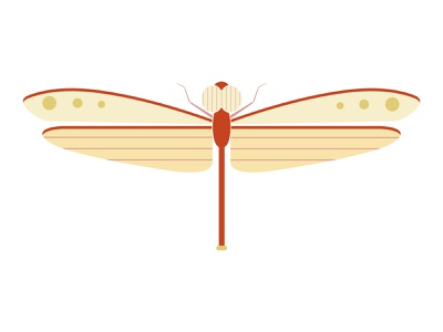 Red Dragonfly dragonfly red flying minimal geometric design vector bug beetle illustration flat insect