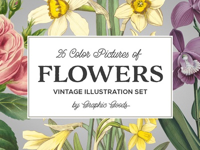 Collection of vintage floral illustrations is here!