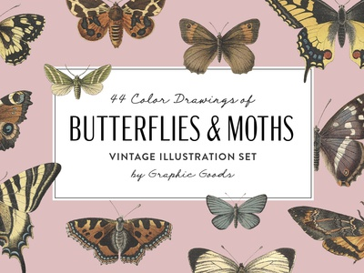 Butterflies and Moths - Vintage Illustrations