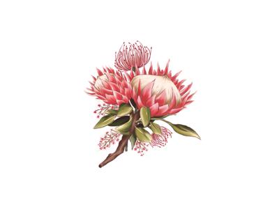 Protea Digital Painting