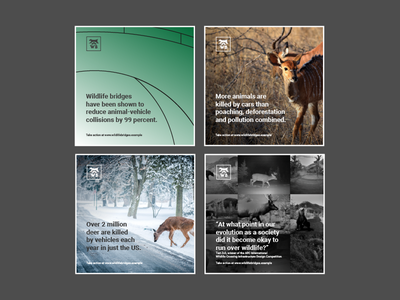 Wildlife Bridges Social Media Posts uk norfolk norwich conservation advertisement marketing social media logo design bridges art