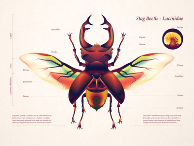 Lucinidae - Stag Beetle vector gradients linear art conceptual illustration flat art graphic design digital art vector art adobe illustrator editorial illustration illustration