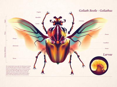 Goliathus - Goliath Beetle character art gradients vector conceptual illustration flat art graphic design digital art vector art adobe illustrator editorial illustration illustration