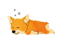 Don't Wake the Corgi