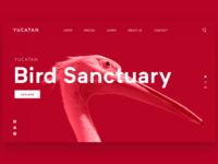Flamingo Bird Sanctuary
