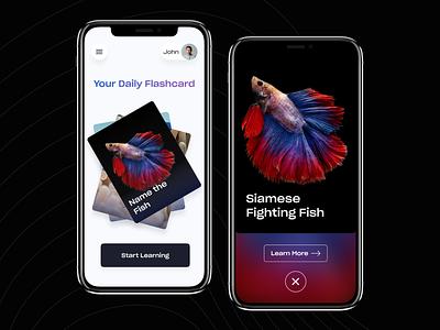 Flashcard App Concept! flashcards quiz app quizzes quizz flashcard quiz modern app design ios app design app concept design uiux ios app ux ui