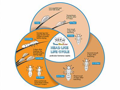 Info Graphic for Head Lice Removal info graph vector illustrator branding