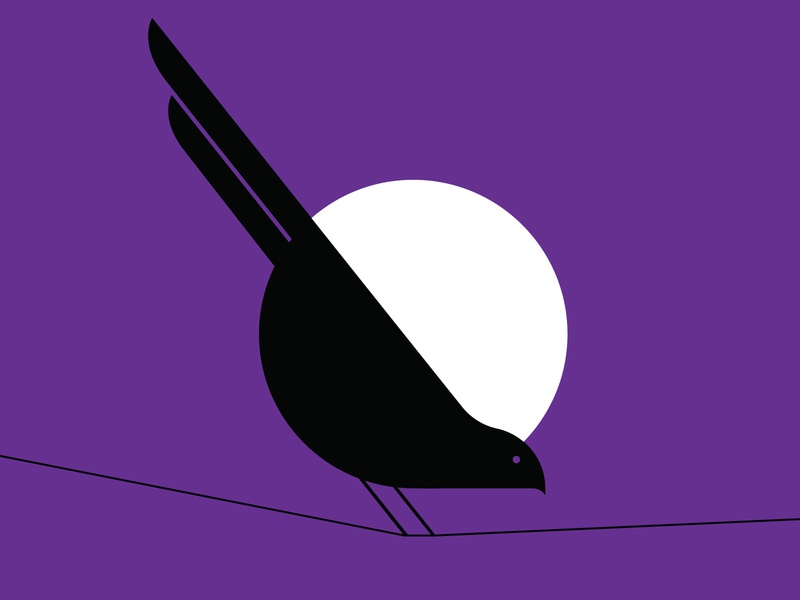Bird on a wire night illustration vector bird