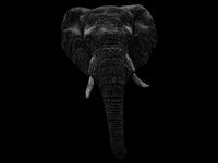 Elephant portrait. Scribble art.
