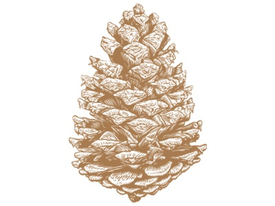 Pine Cone print greeting card pine cone art illustration