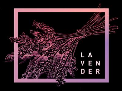 Lavender  branding design alcohol flowers gradient minimal etch crosshatch illustration gradients lavender