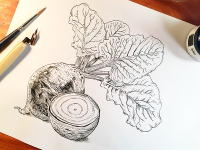 Beet. alochol ingredients vegetable crosshatch calligraphy brush pen ink drawing illustration linework organic