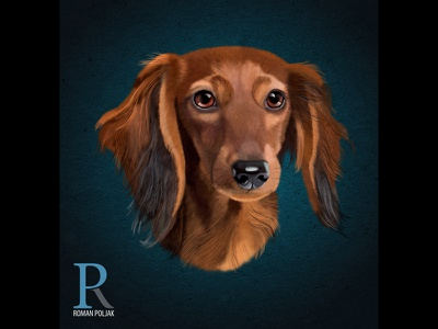 Dachshund Realistic Illustration art high detail photoshop wall art t shirt print print on demand illustration digital painting dog dachshund