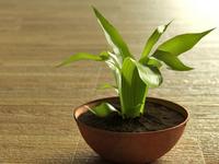 The Plant (3D Render)