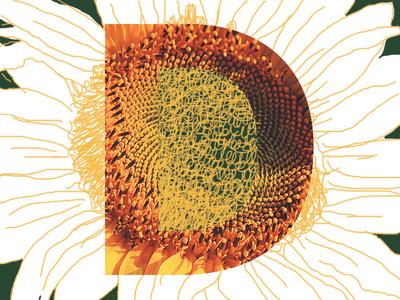 D illustration sketch d type flower