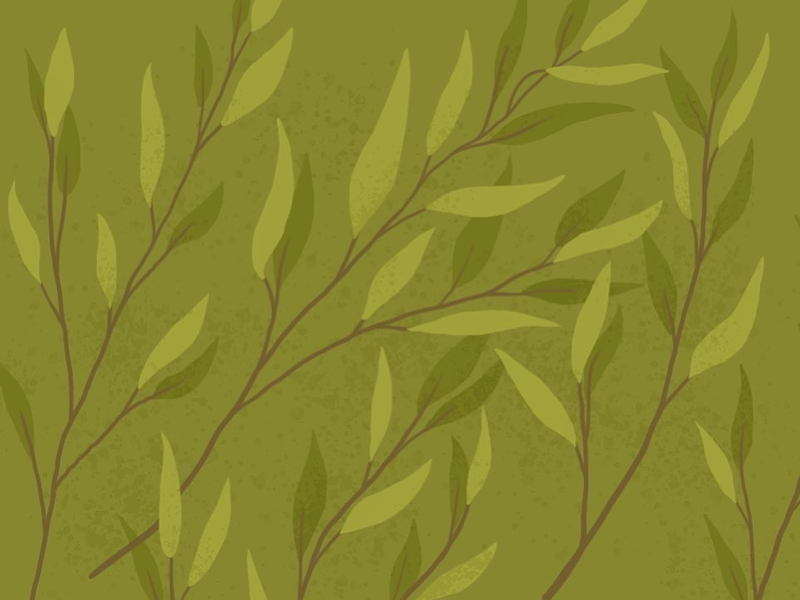 Tea tree illustration digital art illustration pattern design plant