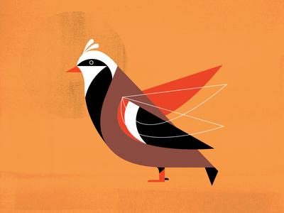Holiday Partridge Bird