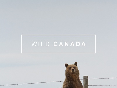 Wild Canada ios cbc ipad grid layout native iphone