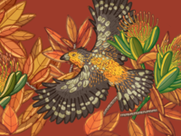 Crested Barbet textile bird illustration nature illustration illustration bird