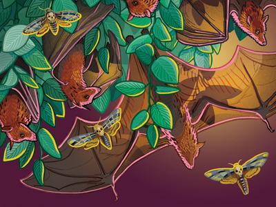 Blind educational illustration photoshop moth illustration nature bats