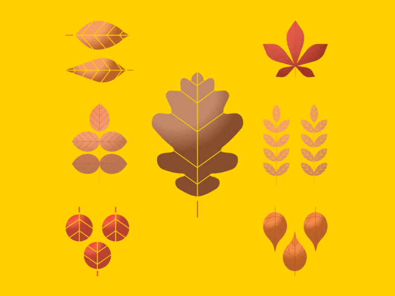 Autumn Leaves colour inspiration sketch drawing vector autumn leaves illustration