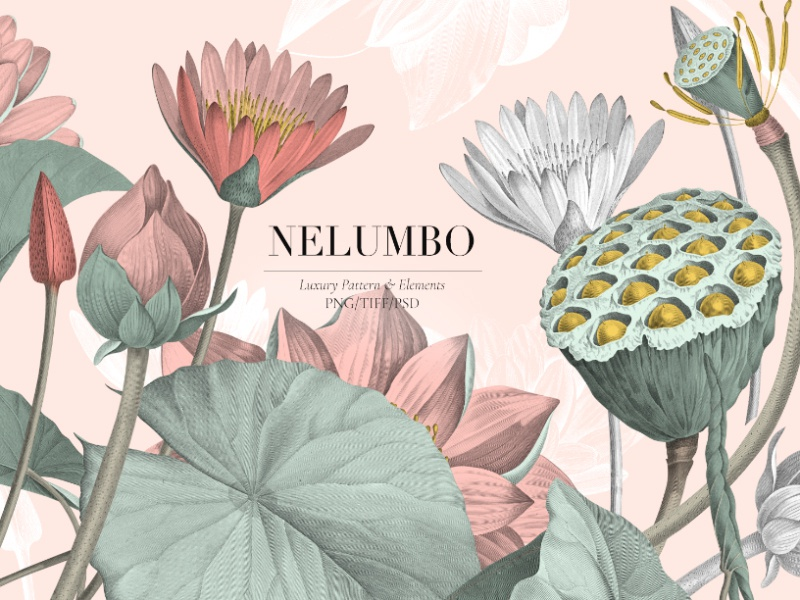 Nelumbo lotus flower bold leaves pond lotus fabrics illustration art designs florals design prints textiles seamless patterns