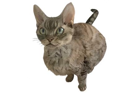 My cat Michelle