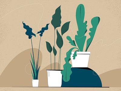 Houseplants botanical home green plants flowers design illustration vector