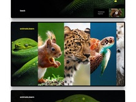 Learn Animals Web App