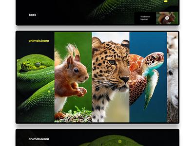 Learn Animals Web App prototype animation website ui ux app design landing page adobexd