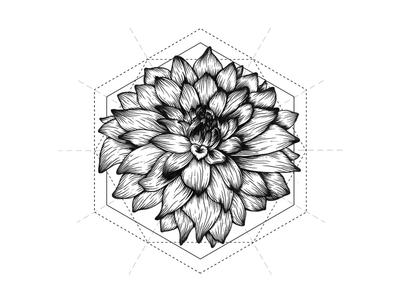 Dahlia Flower Ink