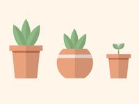 Plant pots 🌱