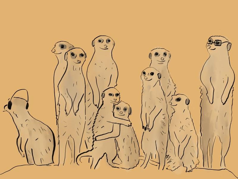 A group of ten meerkats