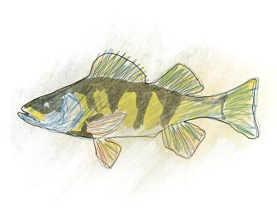 Fish illustration fish