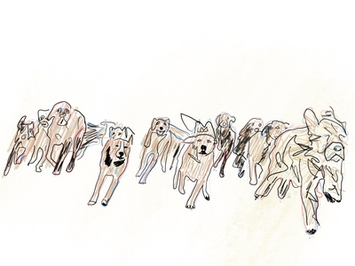 Dogs dogs dog animal illustration illustration