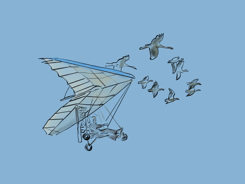 La Volée flyer birds illustration